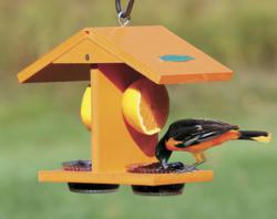 Duncraft's Eco-Oriole Fruit and Jelly Feeder