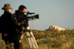 Filming polar bears in 3D near Seal River Heritage Lodge.