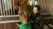 Horse eating SafeChoice® feed