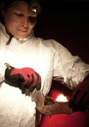 Dr. DeeAnn Reeder, a professor at Bucknell University, is a leading expert on White-nose Syndrome