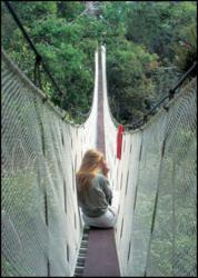 IE Amazon tour guests explore the rainforest from the Canopy Walkway.