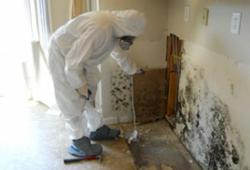 San Francisco CA mold removal specialist inspection a mold infested wall