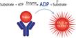 BellBrook Labs Webinar: Analyzing Kinase Inhibitor Residence Times...