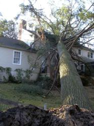 Tree on neighbor's property falls on your house.  Who pays for the the tree removal, property damage and debris clean-up?