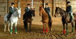 Rising Star Equestrian Center's new Summer Riding Camps offer daily riding lessons and more (photo)