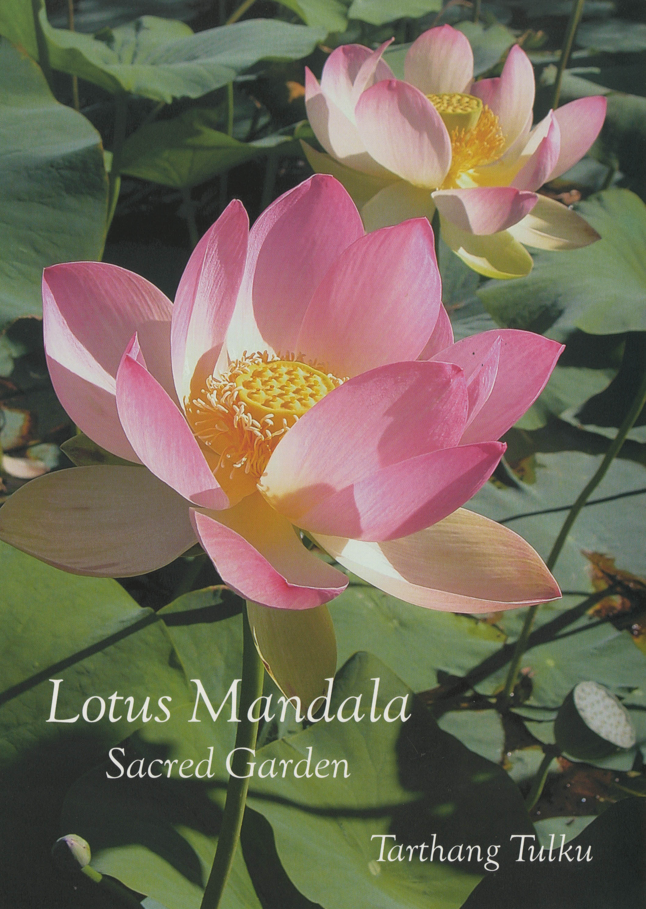 Dharma Publishing The Bay Area 39 S Leading Source For Buddhist Books Is Excited To Offer Lotus