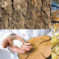 American Larch Tree, Bark, and GA extract