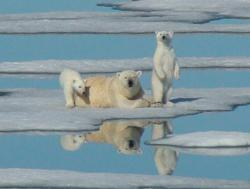 arctic adventures, alaska cruises