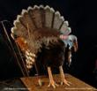 Life Size Wild Turkey Groom's Cake by Three Brothers Bakery