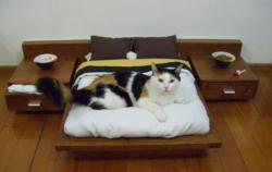 $1600 Cat Bed is a Good Example of Marketing to the Affluent