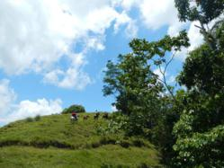 Horseback Riding Costa Rica Vacations