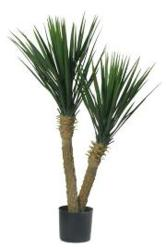 For the home, office or staging purposes, the Yucca tree can be a beautiful decoration.