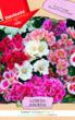flowers, annual, pots, colorful