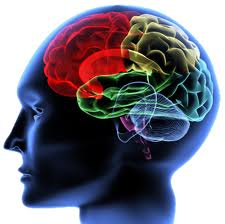 Neurology Sciences @ ScienceIndex.com