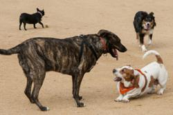 Tucson Dog Park Aggression