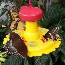 Duncraft's S7820 Butterfly Feeder