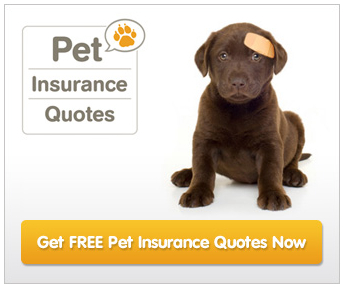 Health Insurance Companies >> How Much Does Pet Insurance Cost?