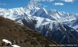 Minyak Gangkar trekking