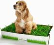 Farewell Pee Pads - Dogs Want Real Grass
