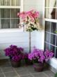Bougainvillea Bambino and Garden Party Patio trees add tropical flair to porches, patios and decks