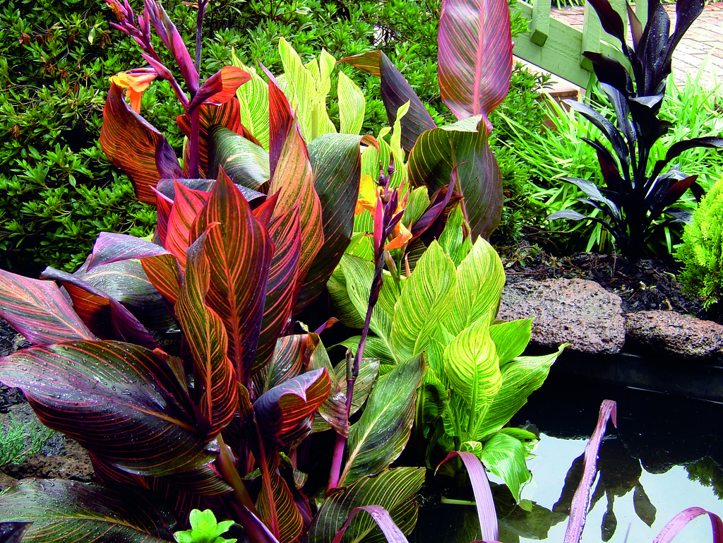 Tesselaar plants helps rev up your outdoor living with for Plantas tropicales de exterior