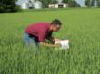 Brad Erker, LCS Product Manager inspects wheat for seed purity