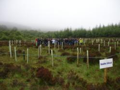 Baidhe Wood was planted by 50 employees of Allianz Insurance in Austria.