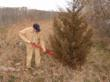 EZ-Ject lance and herbicide used to eliminate unwanted trees