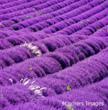 Provence-Alpes-Côte d'Azur ©Olimpio Fantuz/4Corners Images