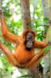 © Fletcher & Baylis / WWF-Indonesia