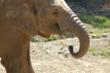 Oakland Zoo Hosts 16th Annual Celebrating Elephants Event