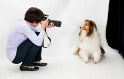 DigiLabsPro Blog Introduces Photographing Dogs by Jann Tenenbaum