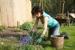 Women weeding in garden