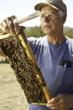 Michael McDonald and his honey bees in Brooks, California.