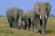 WWF Statement on Senate Hearing on African Poaching Crisis