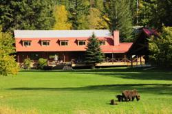 Watching Grizzly Bear Families Frolicking on the Lawn at Tweedsmuir Park Lodge is a Common Sight.