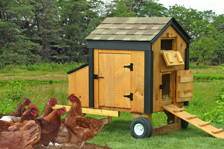 Mini Chicken Coop Plans Mini Chicken Coops For
