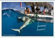 Shark! Weekend Fishing Tourney