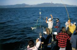 Banner season forecast for charter fishing out of ilwaco for Ilwaco wa fishing charters