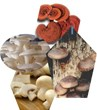 International Medicinal Mushroom Conference Opens: New Research Can...