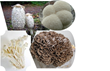 Edible Mushrooms with Medicinal Properties: From top, clockwise: Shaggy Mane, Lion's Mane, Maitake, Enoki