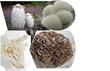 Edible Mushrooms with Medicinal Properties: From top, clockwise: Shaggy Mane, Lion's Mane, Maitake, Enoki