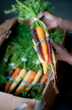 Organic Carrots from Grower's Organic