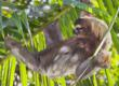 International Expeditions Offers Free Extension to Sloth Sanctuary on...