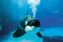 Marineland Package