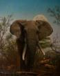 wildlife fine art, landscape fine art, fine art paintings