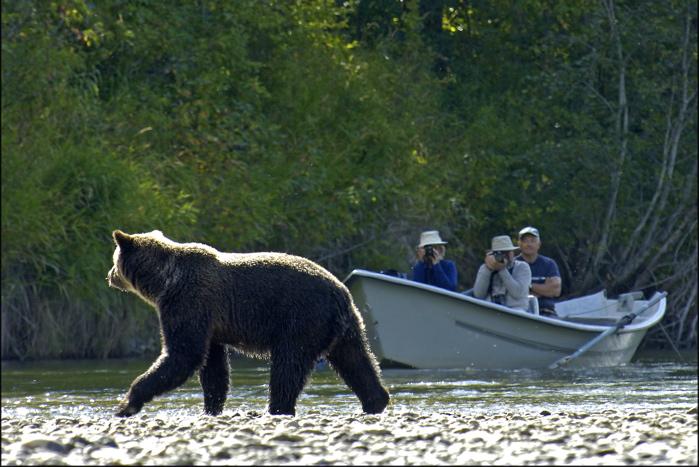 Tweedsmuir Lodge Grizzly Bear Tours