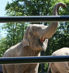 Psychic elephant