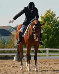 Rainman Dressage Photo