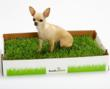 "Dog Trainer Recommends New Dog Potty – A ""Fresh Patch"" of Real-Grass..."